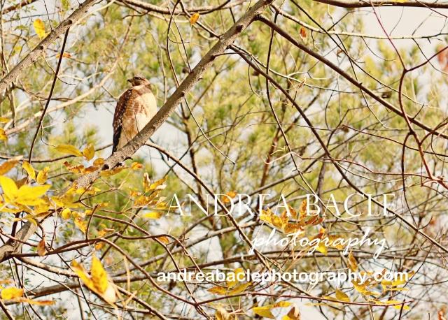 the woodlands tx natural light photographer