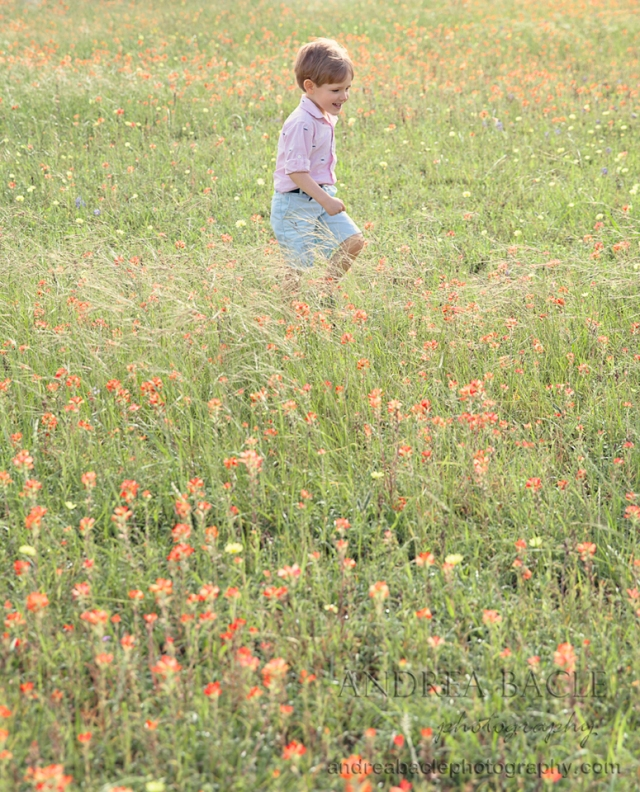 brenham indian paintbrushes family photographer