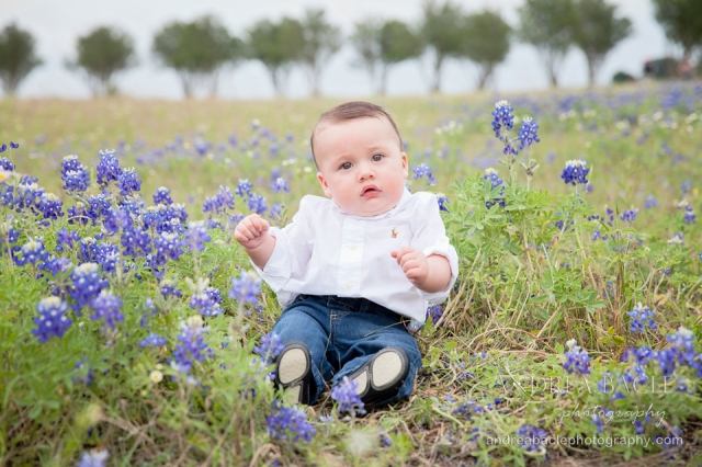 the woodlands tx bluebonnet photographer