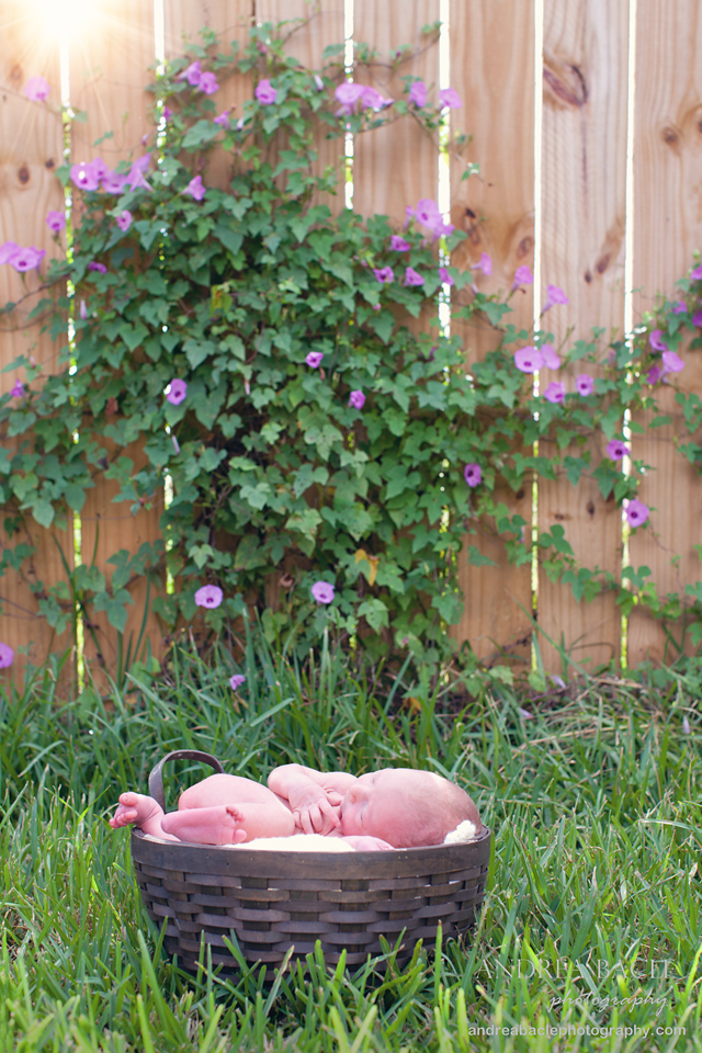 blog-post-baby-in-a-basket-morning-glories2