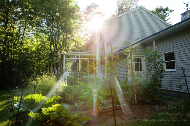 maine-blog-post-lifestyle-at-home-garden
