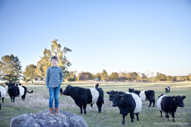 blog-post-cows-and-sunset-on-the-ranch