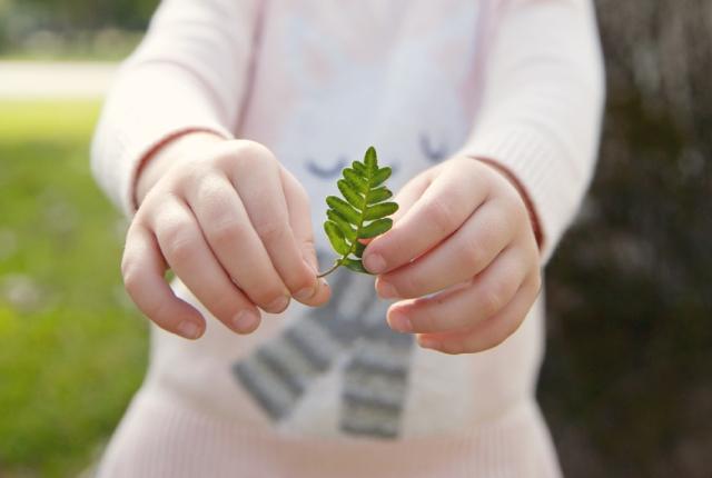 blog-preschooler-little-fern