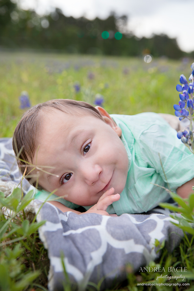 bluebonnets preemie prints post 1