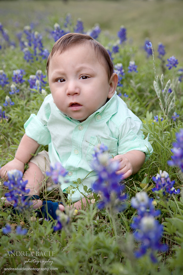 bluebonnets preemie prints post 3
