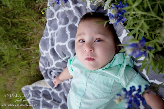 bluebonnets preemie prints post 5